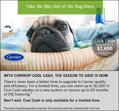 carrie_dog_cashCOLOR